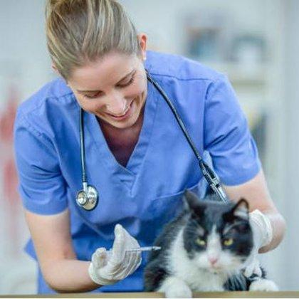 Dzīvnieka vakcinācija